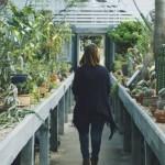 Elementy projektowania ogrodów